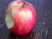 crisp autumn apple