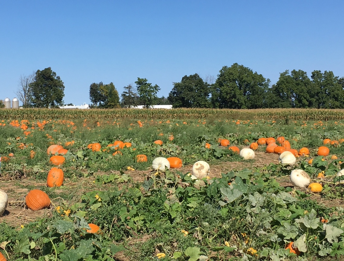 pumpkin (and gourd) patch